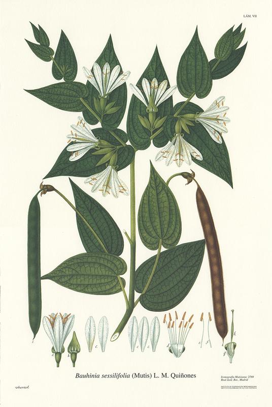Flora de la Real Expedición Botánica del Nuevo Reyno de Granada
