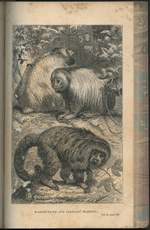 The Naturalist on the River Amazons: A Record of Adventures, Habits of Animals...