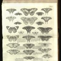 http://libexh.library.vanderbilt.edu/impomeka/travel/Sloanes_Jamaica_Vol2_259.jpg