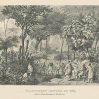 http://libexh.library.vanderbilt.edu/impomeka/travel/F_2513_R925_1972-06-Plantation.jpg