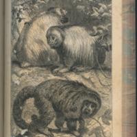 http://libexh.library.vanderbilt.edu/impomeka/travel/QH111_B3-1863v2-Amazons-Monkeys-p307.jpg