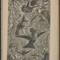 http://libexh.library.vanderbilt.edu/impomeka/travel/918_1_A21a-Hummingbirds-p175-image.jpg