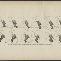 Animal Locomotion: the Muybridge Work at the University of Pennsylvania, the Method and the Result