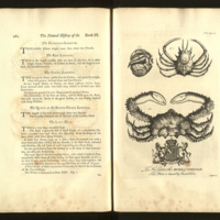 The Natural History of Barbados: In Ten Books